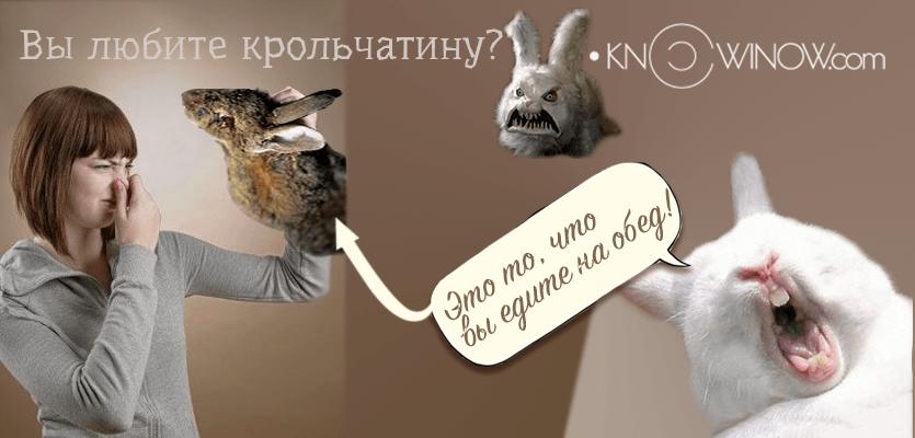 Вы любите крольчатину? | knowinow.com