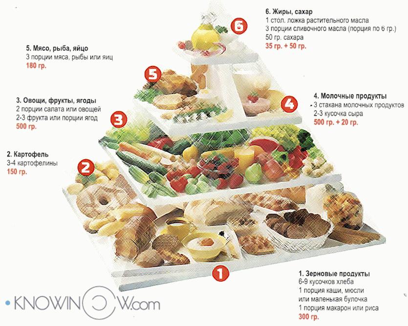 Пищевая пирамида | knowinow.com