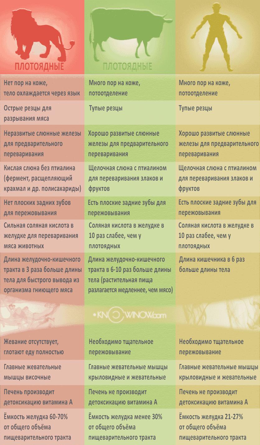 Различия плотоядных и травоядных | knowinow.com
