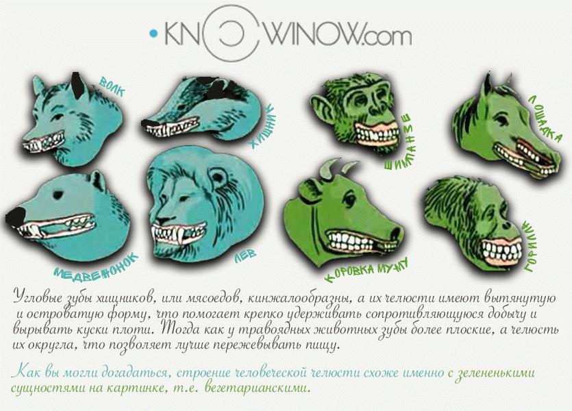 Строение челюстей животных | knowinow.com