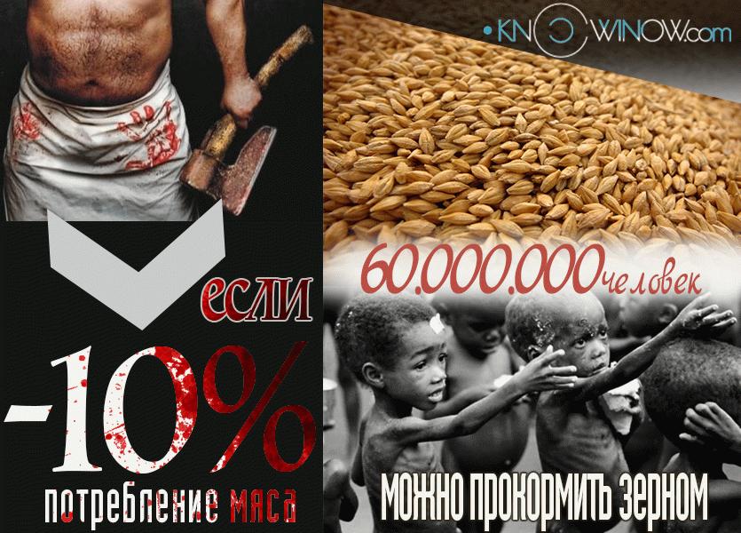 Если снизить потребление мяса на 10% | knowinow.com